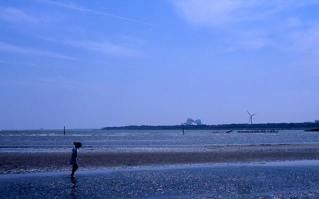 海岸の干潟