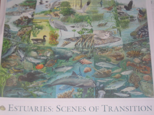 Scenes of Transition Poster