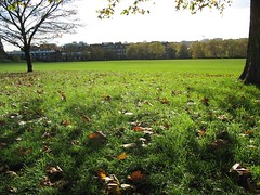Leaves on the ground, Primrose Hill