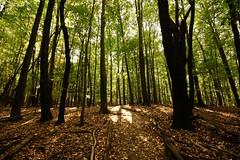 Walk with me (G0Da) Tags: orange sunlight green fall leaves dark woods peace forrest path michigan deep trail erda