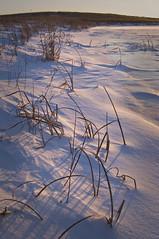 Winter Shoreline (baldwinm16) Tags: winter sunset snow cold ice frozen frigid springbrook springbrookprairie crookedslough illinoisforestpreserve springbrookprairieforestpreserve