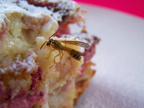 torta con manzana y fresas 004