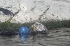 IMG_2697 (Muninn) Tags: montereybay montereyaquarium