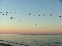 2003_0521DolphinHeadOct1620050058 (jwinspect) Tags: sunset beach birds oceran
