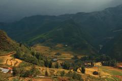 Rice Fields in the Valley (fesign) Tags: landscape scenery vietnam valley ricefield sapa riceterraces fesign terracedfields istvankadar hoanglienson laocaiprovince hoangliennaturereserve