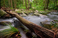 48.366 (-spam-) Tags: 20d nature water creek canon flow sigma australia queensland flowing 365 1020 cedarcreek cokin 366 potn project365 nd8