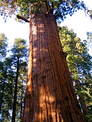 Magic Tree (hobogloves) Tags: nature roadtrip2006