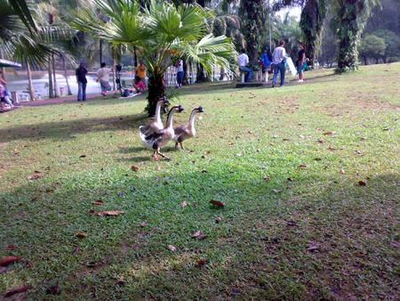 Bandar Tun Razak Park 5
