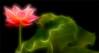Fractalius Red Lotus Flower with green leaf / green / red / nature /  on black background - IMGP8189 - , ハスの花, 莲花, گل لوتوس, Fleur de Lotus, Lotosblume, कुंद, 연꽃, (Bahman Farzad) Tags: red flower macro green nature fleur yoga de leaf peace lotus relaxing peaceful meditation therapy redflower 莲花 گل lotusflower lotusflowers lotuspetal 연꽃 redlotusflower lotuspetals कुंद lotosblume ハスの花 fractalius لوتوس lotusflowerpetals lotusflowerpetal