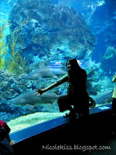 me and sharks