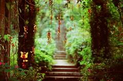 a escada #2 (zenog) Tags: petropolis alcobaa thunbergiamysorensis correias anoldhouseonthemountains
