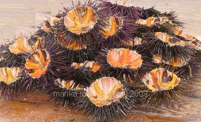 sea urchins Puglia