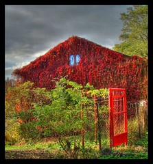 Red (stefbra) Tags: autumn red fall fence poland ivy hdr highdynamicrange gable lodz wicket łódź photomatix widzew furtka 3exp bluszcz stefbra stefanbrajter