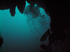 PICT0024 (JoseQ) Tags: blue mar hole great tiburones buceo caribe submarinismo tiburón