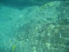 IMG_2405 (dcgreer) Tags: malaysia pulau redang pulauredang
