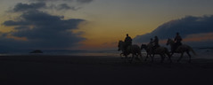 Trotando en la playa (Perchern) Tags: espaa horse naturaleza sol beach nature night landscape caballo atardecer spain sand espanha die fuji natural natur natuur asturias playa natura paisaje s arena finepix paysage der espagne paysages nube spanien spagna anochecer spanje naturelle fd spania eine frage trote  naturel kwestie hiszpania randonnes viste  naturalism trotar ispanya 6500 spanyolorszg panlsko uitzichten     sichten naturalismo naturalismus    paysagisme natrlicher