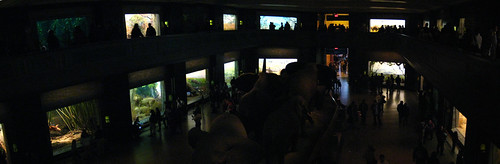 Panorama - Hall of African Mammals