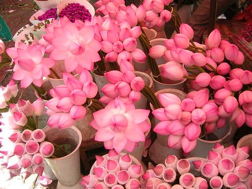 loutus flowers