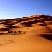 Peio-Lan, Richard, Virus a traves del desierto