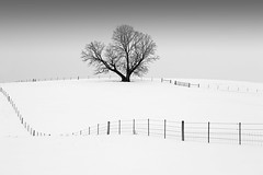 Mr. Elder Tree (Todd Klassy) Tags: winter sky blackandwhite white snow black cold tree monochrome beautiful field horizontal wisconsin yard rural fence season landscape outdoors flora gate quiet snowy farm branches horizon fineart country hill snowdrift january nobody nopeople foliage pasture bark oldtree monroe trunk serene lonely bigtree desolate idyllic wi graysky mothernature wintersky lonetree oldmanwinter snowbank winterweather fenceposts fallensnow winterlandscape stockphotography winterscene rurallife onetree rusticroad snowyscene beautyinnature greencounty leaflesstree rurallandscape ruralwisconsin lifeonafarm winterinwisconsin wisconsinphotographer horizonoverland monroewisconsin wisconsinlandscape boxeldertree wisconsinlandscapephotographer winterlandscapescenes
