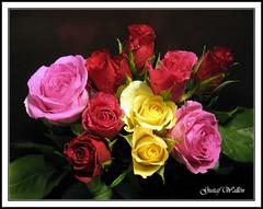 Velentines Tutti Frutti (gustaf wallen) Tags: love rose colourful tuttifrutti blueribbonwinner mywinners abigfave colorphotoaward aplusphoto happyvelentinesday diamondclassphotographer goldstaraward