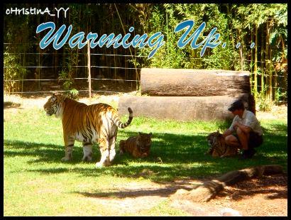 Tiger Presentation: Warming Up