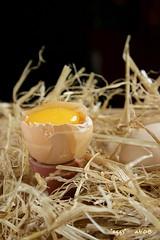 egg #3