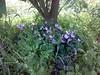 أزهار (salamPics) Tags: ورد طبيعة أزهار بيتي