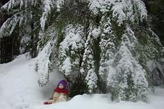 DSC01275.jpgdollMt.Rainier (portugita_norton) Tags: snow doll mtrainier livingdoll