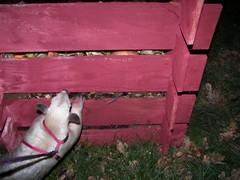 Compost smells interesting