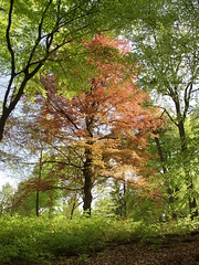 Spring in the forest (rogiro) Tags: red orange color tree green castle freeassociation forest garden spring colorful arnhem veluwezoom rosendael rozendaal
