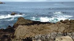 IMG_1216 (mudsharkalex) Tags: california pacificgrove pacificgroveca