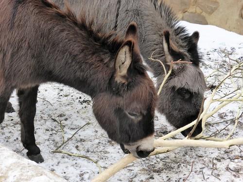 Donkey contrast, Wildlands, Emmen