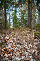 The Forest invites you (David Nyman) Tags: trees tree green beautiful pine forest canon landscape eos is nice woods path mark iii trail 5d lush surrounding cosy 24105 f4l