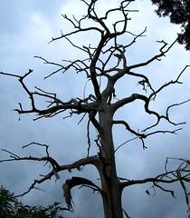 Dark And Stormy (gatorgalpics) Tags: halloween dark wind gainesville stormy spirits fl vigil soe howling sentinel restless allhallowseve newnanslake