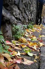 (Rana___) Tags: istanbul foliage autumnal yapraklar sonbahar yaprak gz abigfave fotorafkraathanesi 18kasmbuluma