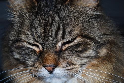 A real cat macro