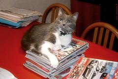 Felix (Antonella Ravasi) Tags: cats cat felix 2008 gatto gatti aged14 kissablekat