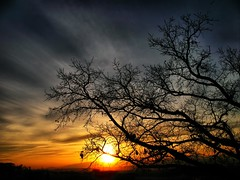 Yet Another Beautiful Sunset (ToniVC) Tags: canon powershot a640 sunset nature sun tree beauty girona silhouette sunshine bravo magicdonkey tonivc