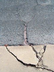 From the root (PatHayes) Tags: tree sidewalk cracks lookingdown pensacola