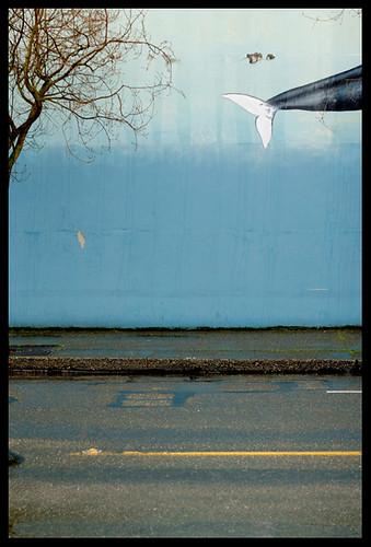 Tree Street Orca Wall