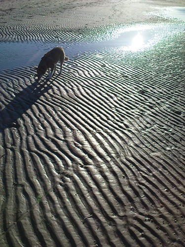dog reflection strand scheveningen hond zora jogging hardlopen wintersun noorderstrand uitlaten winterzon