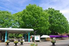 Green Cloud  (oldnavy2000) Tags: park blue sky cloud green botanical tokyo spring       jindai      k20d