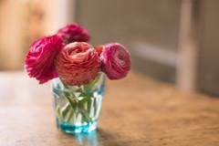 7/52 Soft hollow portrait (Nathalie Le Bris) Tags: stilllifefleurrenoncule soft suave flor stilllife rosa flower