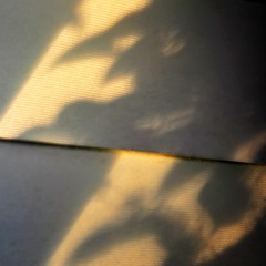 (SteffenTuck) Tags: morning light white blur macro glass shadows bokeh interior edge softfocus athome inside louvres steffentuck