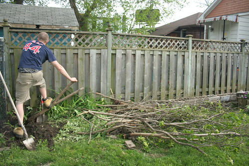 May 21, 2011 - tearing out the lilac tree
