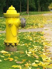 黃色的消防栓