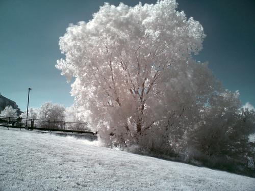 White Grassland