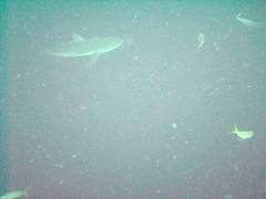 PICT0065 (JoseQ) Tags: blue mar hole great tiburones buceo caribe submarinismo tiburón