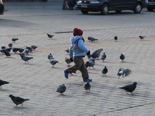 krakow pigeons (18)
